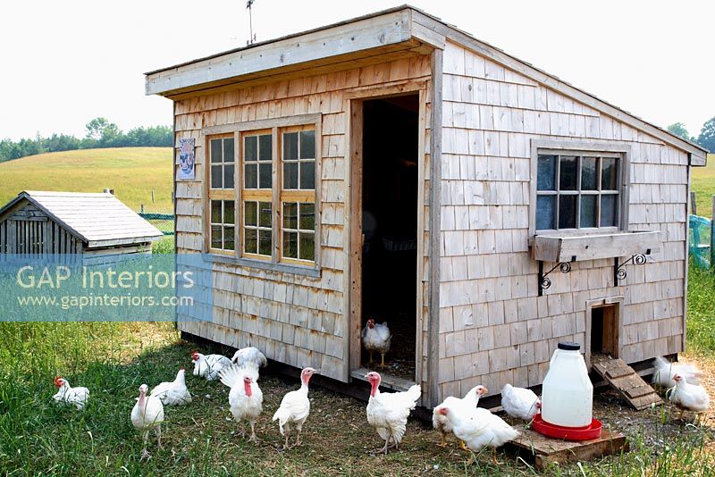 Hens outside wooden chicken coop