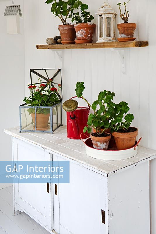 Geraniums and gardening equipment