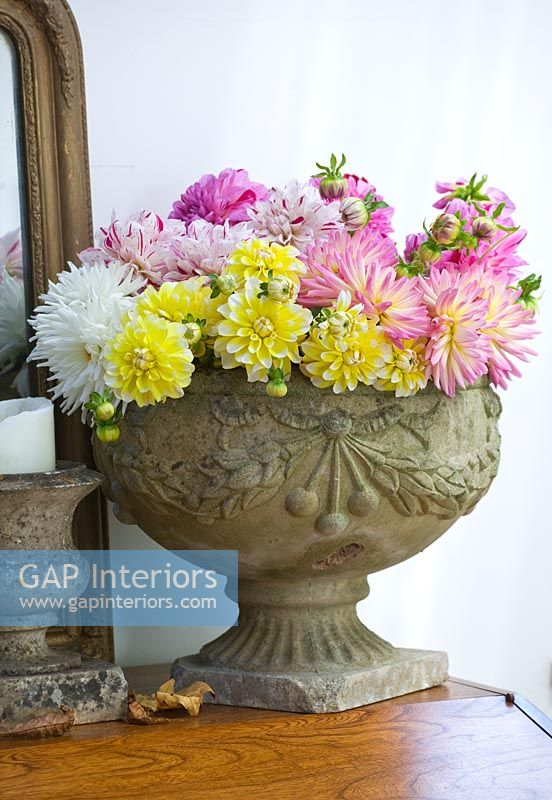 Stone urn filled with Dahlias