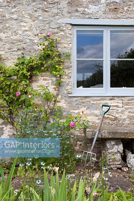 Roses and Love in a mist growing by farmhouse window