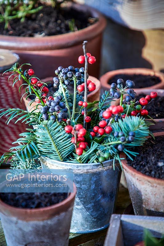Berries and conifer foliage