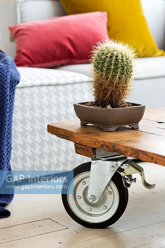 Cactus on the wooden coffee table