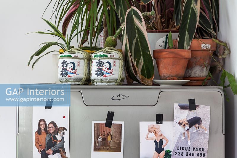 Houseplants on top of fridge freezer covered in family photos