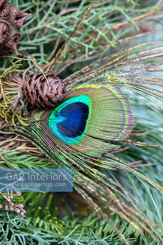 Peacock feather on Christmas wreath - detail