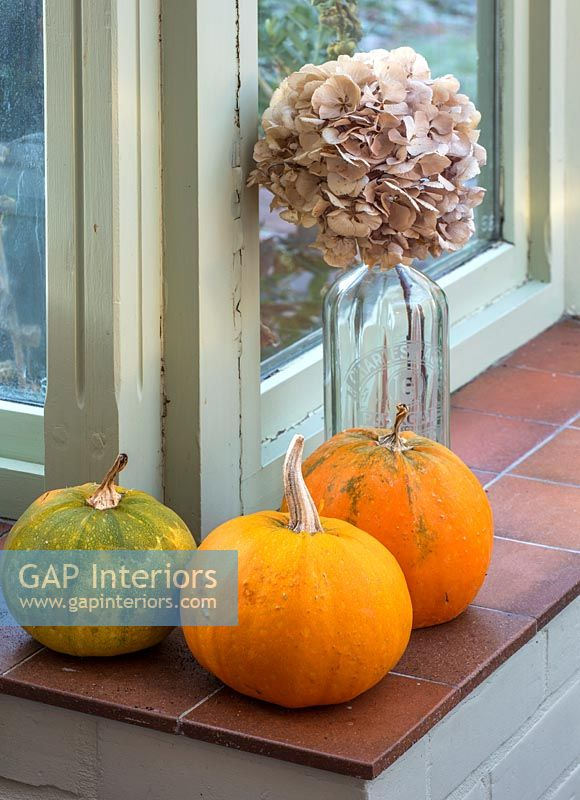 Windowsill with pumpkins and glass vase of dried hydrangea flowers