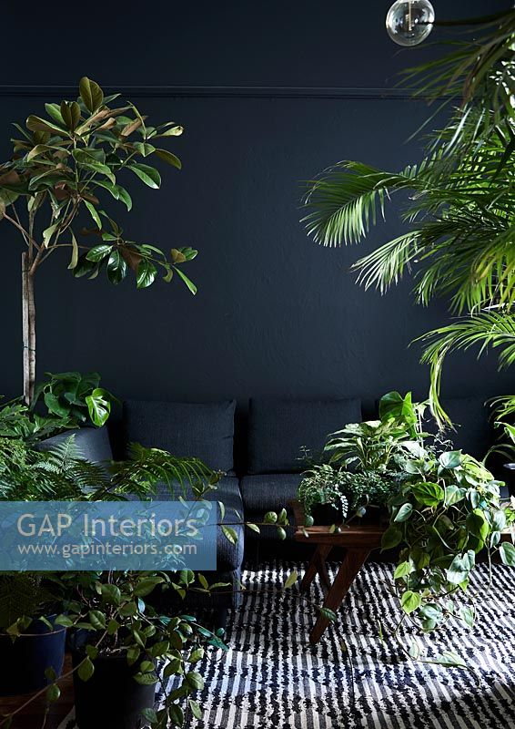 Black living room with green houseplants