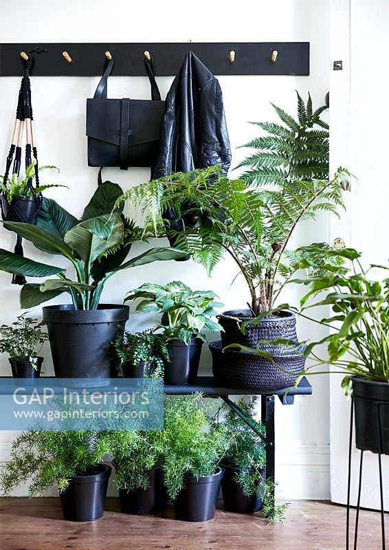 Display of green houseplants in black containers