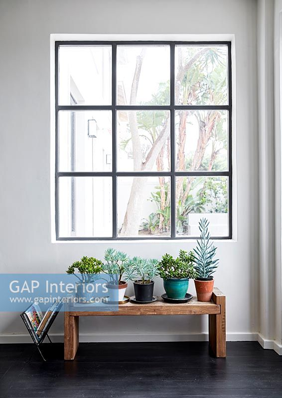 Modern window with pot plants
