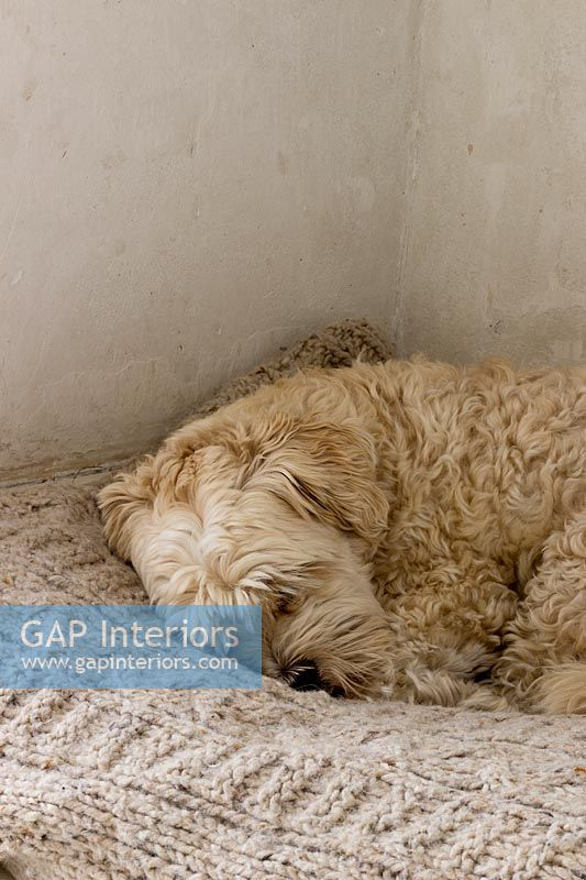 Dog sleeping in fireplace