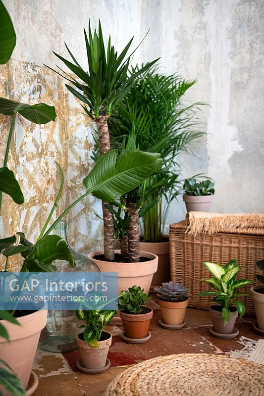 Collection of potted houseplants