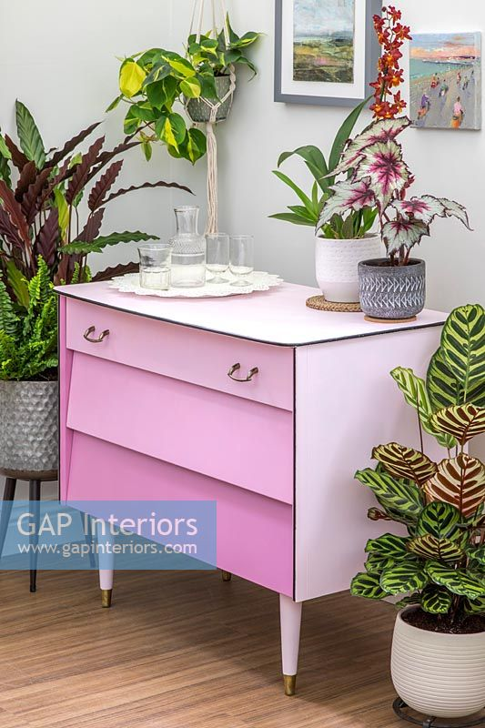 Finished set of drawers painted dusty pink with drawers in different shades - ombre paint effect, surrounded with a mix of houseplants