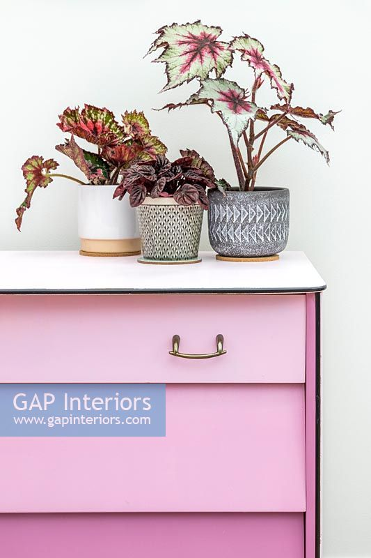 Finished set of drawers painted dusty pink with drawers in different shades - ombre paint effect, group of houseplants
