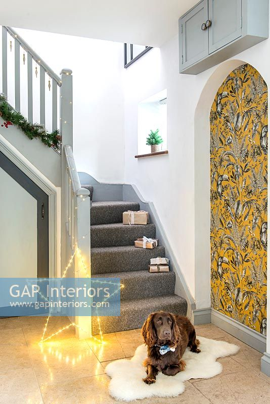 Pet dog on rug in modern hallway with Christmas star light and gifts