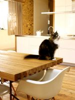Cat siting on modern dining table