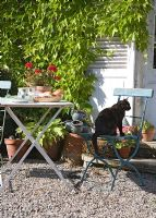 Pet cat sitting on country garden chair