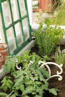 Herbs and vegetables growing in border