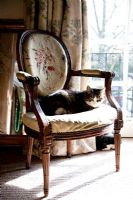 Classic chair with cat