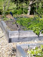 Vegetable patch in country garden