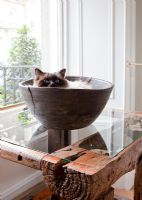 Pet cat curled up in wooden bowl