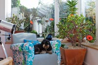 Dog sitting in modern conservatory