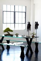 Minimal dining room with display of Bonsai - tree on left is Chinese Maple