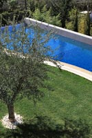 Modern garden with Olive tree and pool