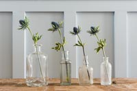 Sea Holly flowers in vintage glass bottles