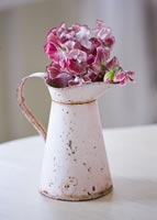 Display of Sweet peas 'Wiltshire Ripple' in vintage jug