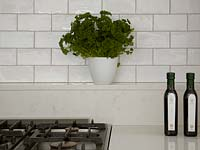 Parsley in white pot