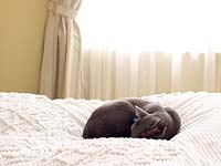 Cat lying on candlewick bedspread