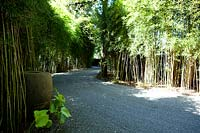 Gravel drive flanked by bamboo plants