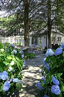 Garden path flanked by Hydrangeas