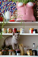 Kitten on kitchen shelves