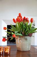 Red Tulips in earthenware container