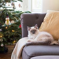Cat sitting on sofa by christmas tree