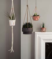 Houseplants displayed in hanging pots