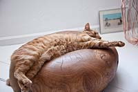 Pet cat lying on wooden accessory