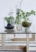 Houseplants in glass containers