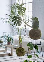 Houseplants display in living room