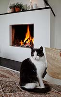 Cat sitting by fire
