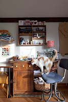 Cat standing on study chair