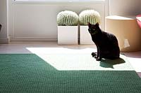 Black cat sitting on green rug