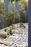 Courtyard garden with drought tolerant plants