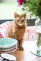 Ginger cat sitting on kitchen table