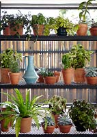 Houseplants display