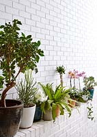 Houseplants on ledge
