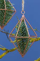 Copper prisms containing pine foliage, hanging from a branch covered in lichen