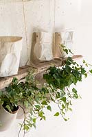 Ivy plants in hanging containers