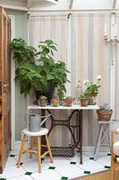 Pot plants displayed on vintage sewing table