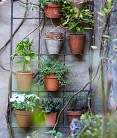 Plant pots on wall mounted rack